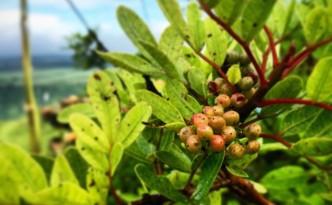 Mauritius - wo der Pfeffer wächst